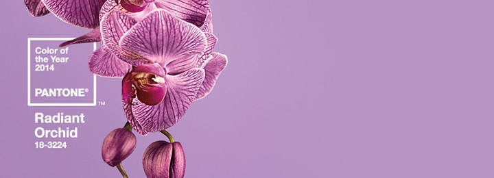 Radiant Orchid: 2014 Color of the Year!